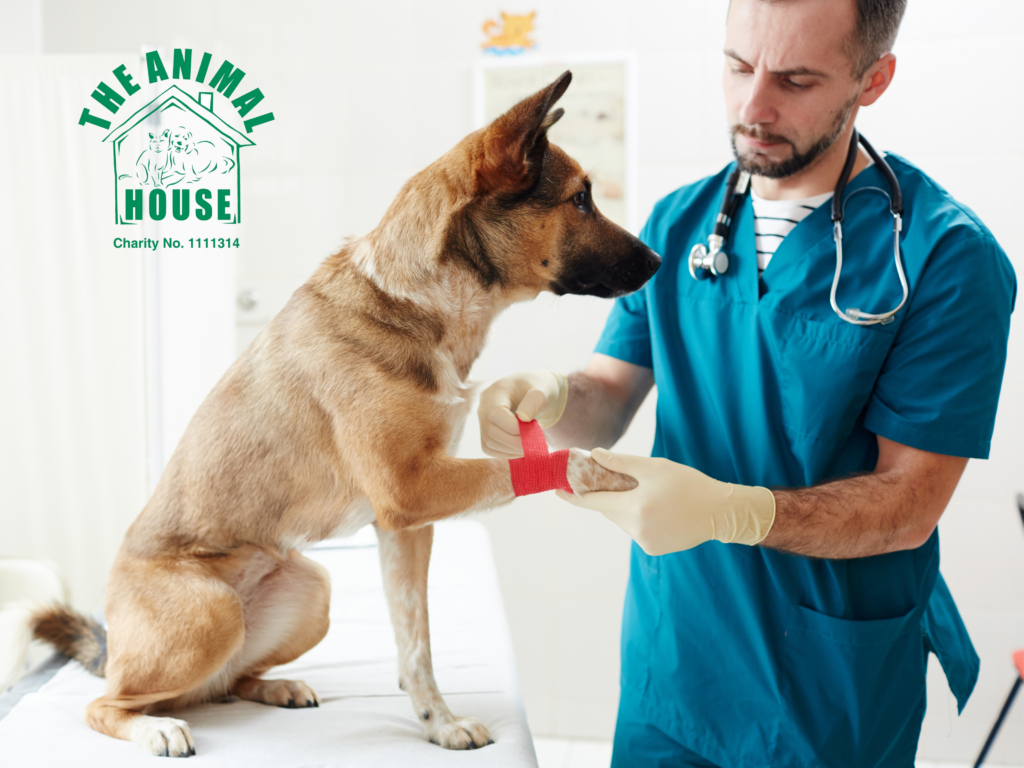 Dog getting veterinary care